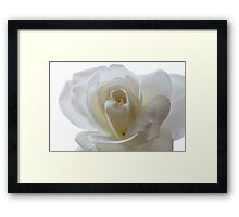 Bright White Rose. Framed Print
