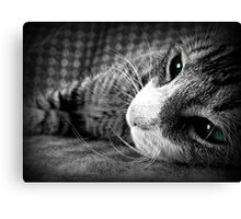 Because who doesn't love kittens? Canvas Print