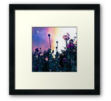Starry Poppies (F.16) Framed Print