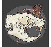 Rat Skull Photographic Print
