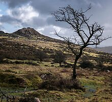 Tree & Tor by Michael Carter