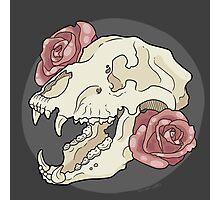 Bear & Roses Photographic Print