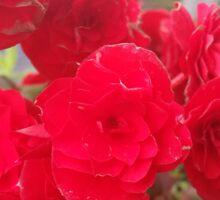 Begonia Flower Sticker