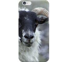 Hebridean Black Face Sheep iPhone Case/Skin
