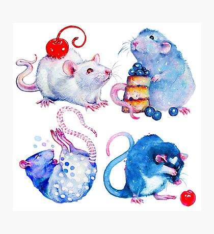 Sweet Rats Photographic Print