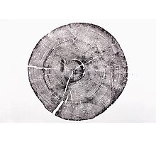 Rock Canyon Pine Photographic Print
