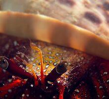 Hermit Crab by James Deverich