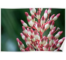 Floral Candy Corn Poster
