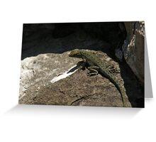 Lizard 03 Greeting Card