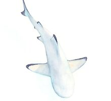 Silicon Shark- for iPhone & iPod by LaraFrizzell