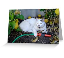 Casper!  I'll tend to the watering! Greeting Card