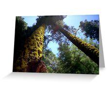 Tree Moss Greeting Card