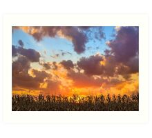 Glorious Harvest - Indiana Sunset Art Print