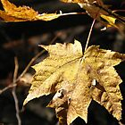 Autumn Leaf by RENcraft