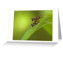 hoverfly couple Greeting Card