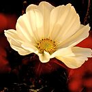 Garden Layers - Cosmea by Mike  Waldron