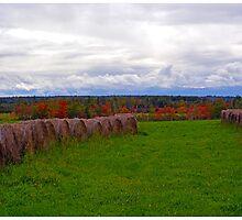 Hay Fields of Nova Scotia by BrasdOrLife