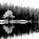 Pond Reflection by David Schroeder