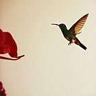 Hummingbird In Tulua, Colombia II by Al Bourassa