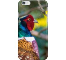 Male pheasant with daffodils iPhone Case/Skin