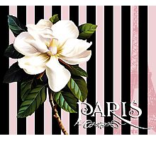 Parisian White Magnolias in stripes, Eiffel Tower France Photographic Print