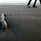 BEACH WALK  IV by June Ferrol