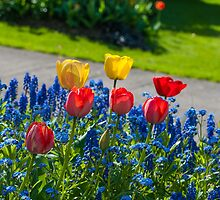 Tulips in the sun by cuttlefish714