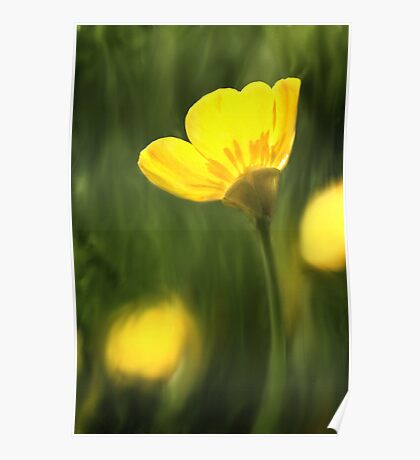 Sunlit buttercup abstract Poster