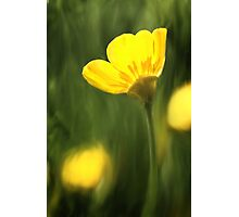 Sunlit buttercup abstract Photographic Print