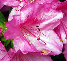 Ant on An Azalea by Righteous Zombie
