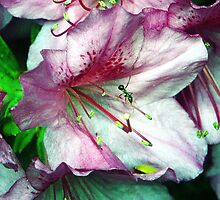 Ant on An Azalea II by Righteous Zombie Photography