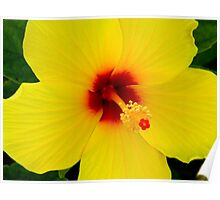 Tropical Flower - Yellow Hibiscus Poster