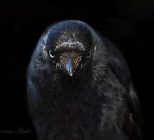 ....I know what you did..... by John44