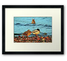 Duck Duck Dunk Framed Print