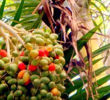 Growing Wild in Cozumel Sticker