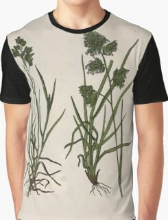 Wayside and woodland blossoms a pocket guide to British wild flowers for the country rambler  by Edward Step 1895 024 Annual Meadow and Cock'sfoot Grass Graphic T-Shirt