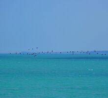 Black sea and birds by Blonddesign