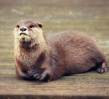The Pondering Otter by Tabatha Thistleton