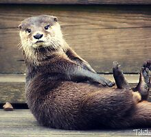 The Otter and His Pebble by Tabatha Thistleton
