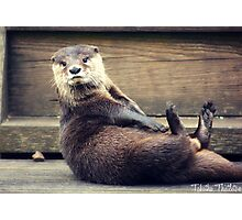 The Otter and His Pebble Photographic Print