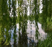 Willow norfolk river by Connor Bartlett