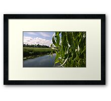 willow over river norwich Framed Print