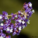 Bee on flowers. by philw
