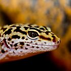 Leopard Gecko, A Dragons Eye by thermosoflask