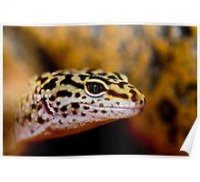 Leopard Gecko, A Dragons Eye Poster