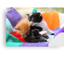 Patchwork kittens Canvas Print