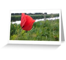 Poppy red over river Greeting Card