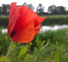 Poppy over river by Connor Bartlett