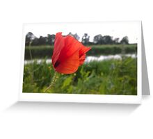 Poppy over river Greeting Card