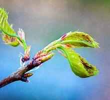 The Joy of Spring by Anita Pollak